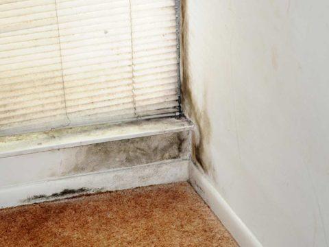 Moho y humedades en la pared de una casa. Se localiza sobretodo en la esquina que da a una ventana exterior.