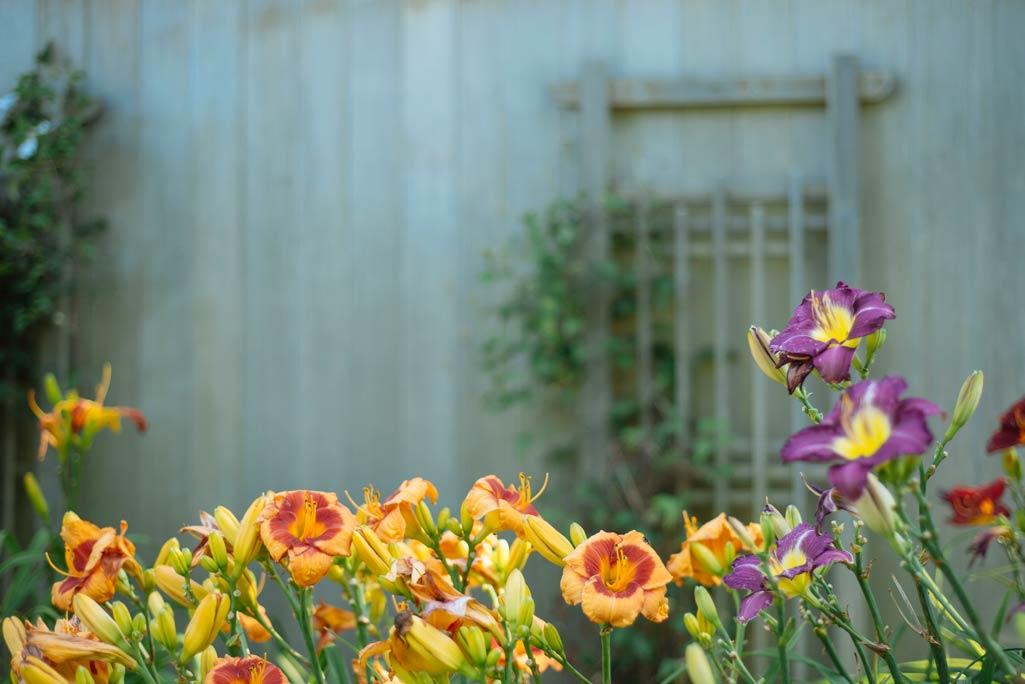 Flores amarillas y lilas de un jardín.